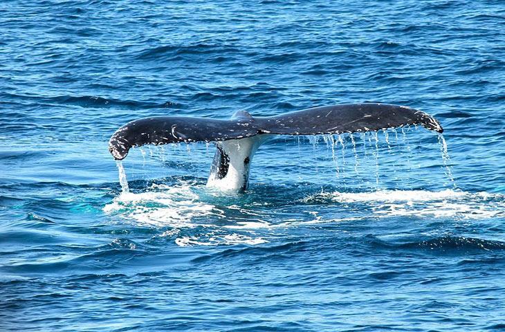 sperme baleine bleue
