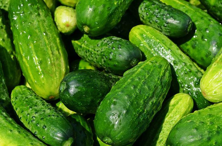 concombre fruit ou légume ?